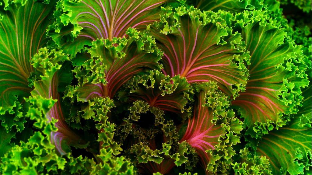 Хранителни режими за дълголетие. Част I-ва – вегетарианство